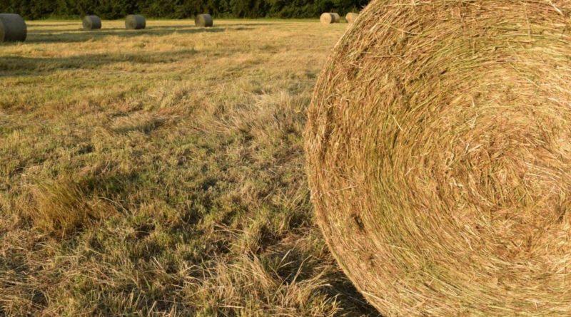Braccia che tornano all'agricoltura