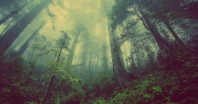 Dark 3 – Una lettura psicologica