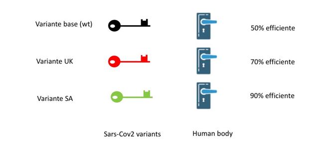 Varianti ed efficacia d'ingresso